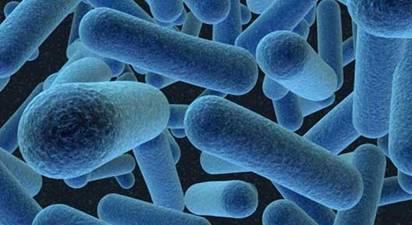 Los humanos también somos microbios | Consejo Estatal para la ...